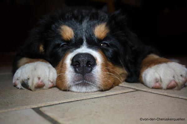 """Schlafen kann ich überall, am besten """"im Weg rumliegend"""" :D"""
