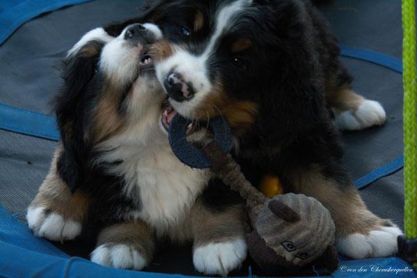 Nächste Woche soll ich auch in mein neues Zuhause ziehen, ich genieße noch die letzten Tage mit meiner Hundefamilie ♥