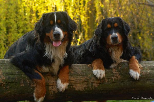 Mit Schwester Athena ein bisschen auf dem Baumstamm chillen ;-)