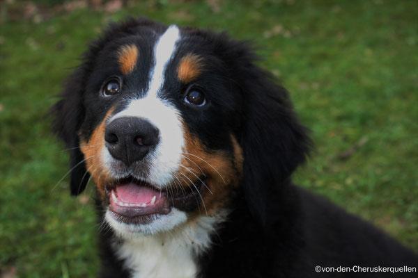 Und da soll einer sagen Hunde könnten nicht Lachen!