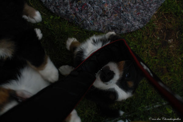 Kleiner Angreifer, unsere Berner mögen wohl keine Paparazzi :-(