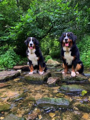 Frauchens Lieblingsstelle hier im Wald, da haben wir gerne einmal für ein schönes Foto posiert :-)