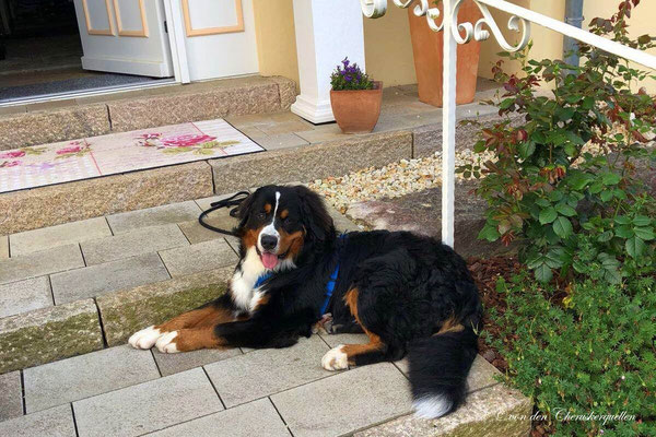 Ich bin ein toller Wachhund! ;-)