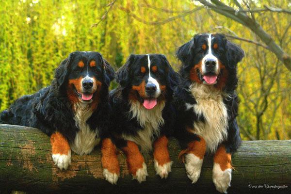 Aber erst noch einmal hübsch posieren fürs Familienfoto :-)