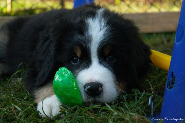 Bruno bewacht SEINEN Ball ;-)