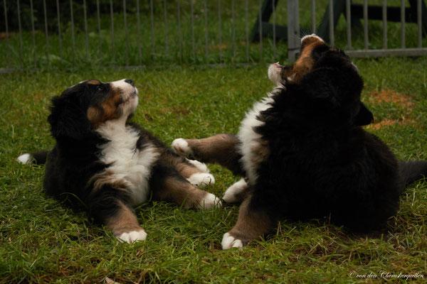 Bones links  und ihr stürmischer Bruder Mowgli rechts :-D