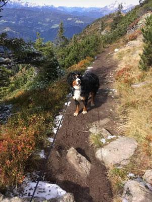 Lina war zum Wandern mit Herrchen und Frauchen in Österreich :-)