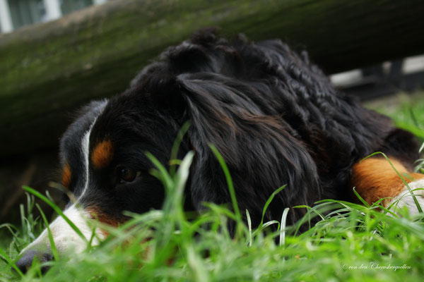 Mit Frauchen im Gras liegen.