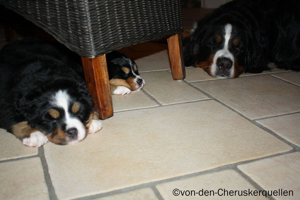 Siesta mit meiner Mama und Schwester Athena :-)