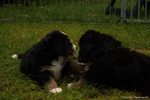 """Und funktioniert :-) Die """"Hundesprache"""" beherrscht die junge Dame perfekt :-)"""