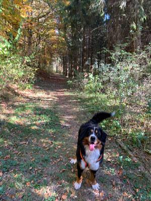 Mit Frauchen unterwegs durch den Wald :-)