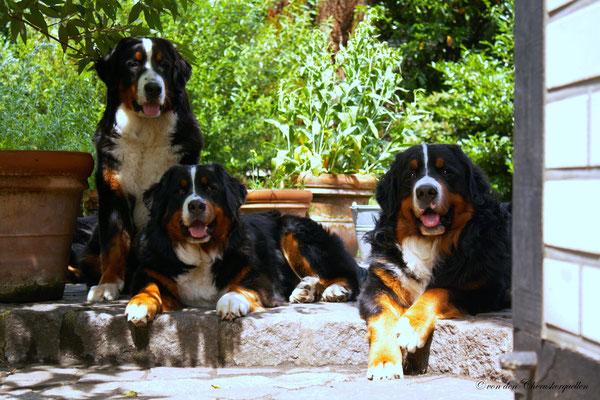 Mit Bijou und Ballantines den Hof im Blick behalten, damit wir nicht verpassen wann unser anderes Frauli nach Hause kommt :-)