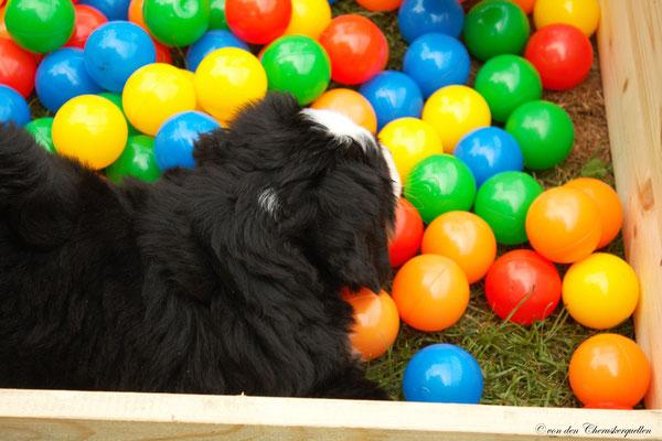 Hunde-Paradies :-)