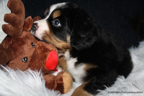 Rudolf wird auch schon aufgefressen!