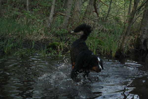 Ab ins Wasser!