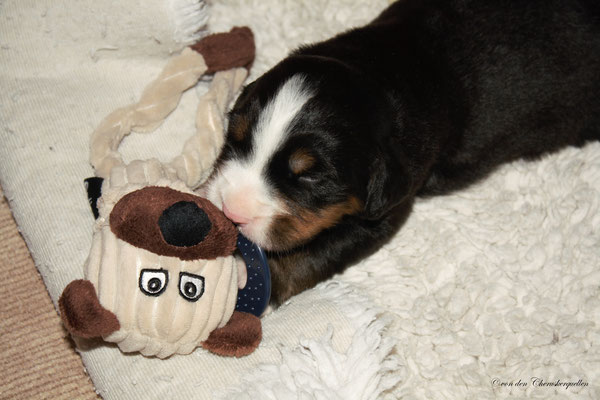 Komm her Du Teddy!🐻