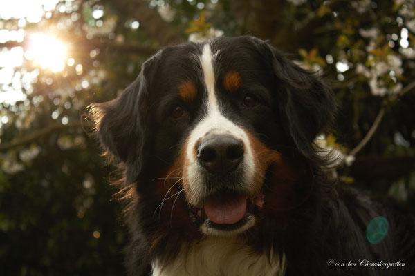 Ein Traumhund in jeder Hinsicht!