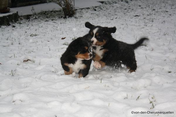 Ab durch den Schnee!