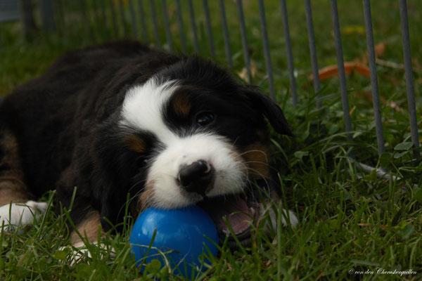Bijou und der blaue Ball :-)