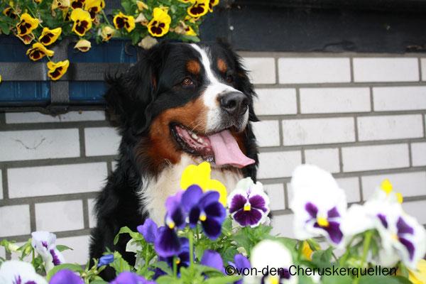 Meine Menschen haben hier schöne Blumen hin gemacht