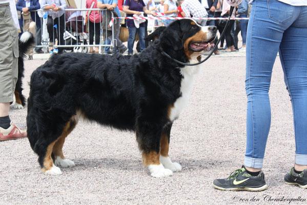 Internationale Hundeausstellung in Erfurt 2018