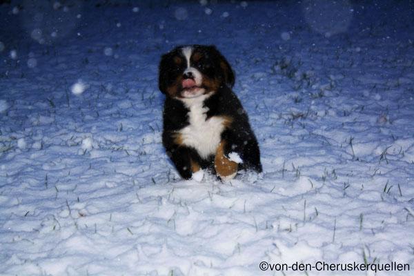 Und wer hüpft da denn so fröhlich durch den Schnee? ;-)