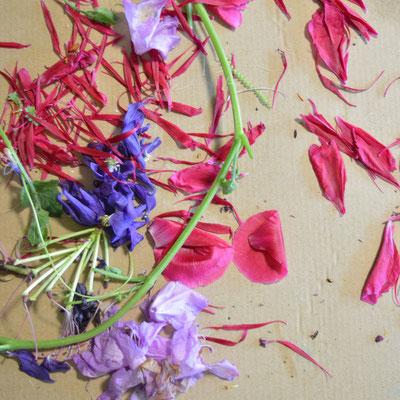 Diese Blüten wurden von Teilnehmern gesammelt, um mit Helen Wissen in ihren kunsttherapeutischen Workshops mit Pflanzenfarbe zu malen.