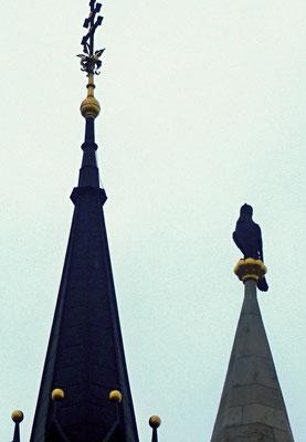386 - Der Turul auf der Krönungskirche