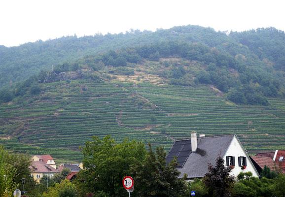 Bild 493 - Rebberge an Steilhängen