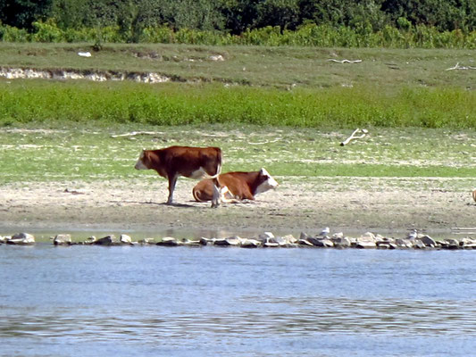 110 - Wo Kühe weiden und die Donau fast blau ist