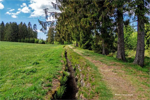 führt derzeit kein Wasser ... der Zellerfelder Kunstgraben