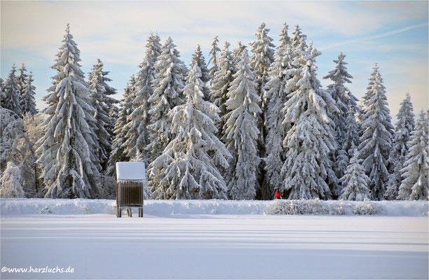 als es noch richtige Winter gab ... am Kranicher Teich