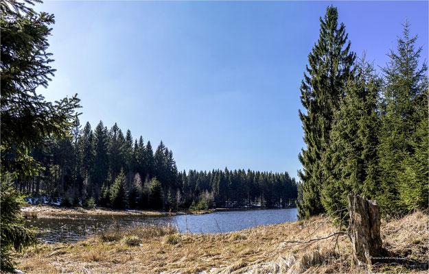am Bärenbrucher Teich ... bei Buntenbock
