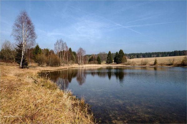 Am Sumpfteich ... bei Buntenbock www.harzluchs.de