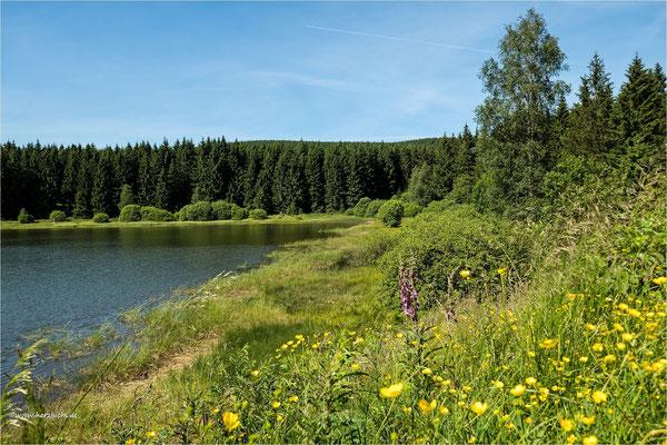 Sommer ... am Zankwieser Teich