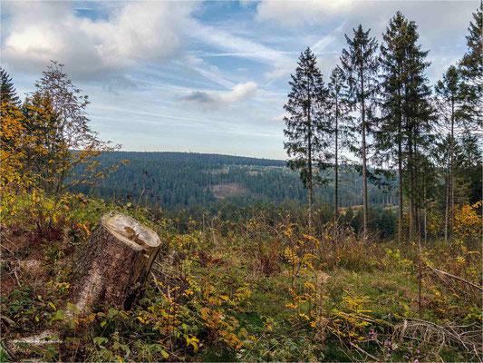 Bäume weg - freier Blick ... am Zellerfelder Kunstgraben