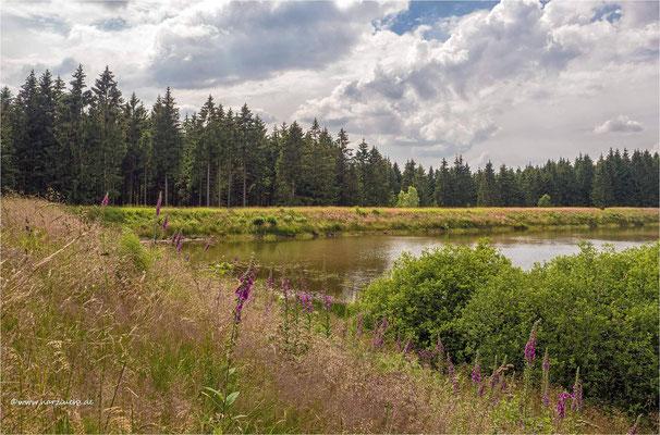 Zankwieser Teich