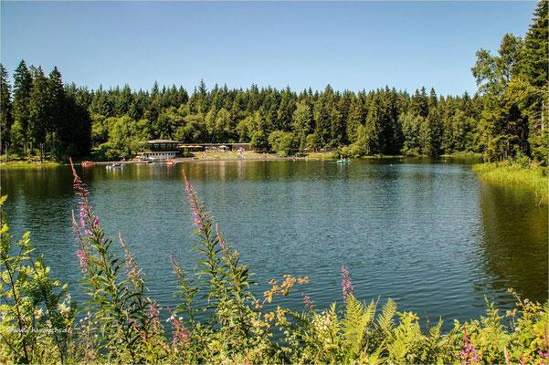 am Kuttelbacher Teich bei Hahnenklee