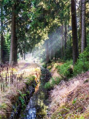 der Clausthaler Flutgraben ... am Aufgang zur Wolfswarte