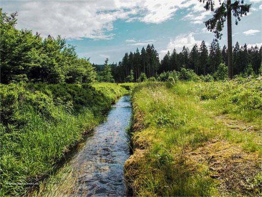 Dammgraben bei Altenau
