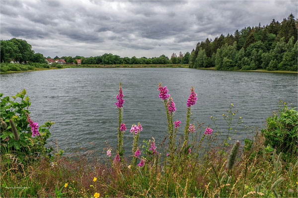 unterer Hausherzberger Teich