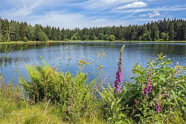 Sommer im Harz ... am Kiefhölzer Teich
