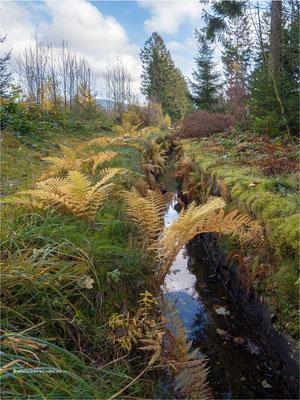 wenn es Herbst wird im Harz ... am Zellerfelder Kunstgraben