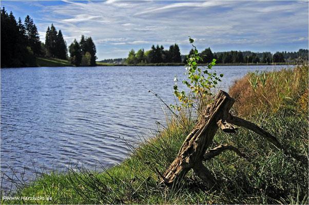 am Ziegenberger Teich ...