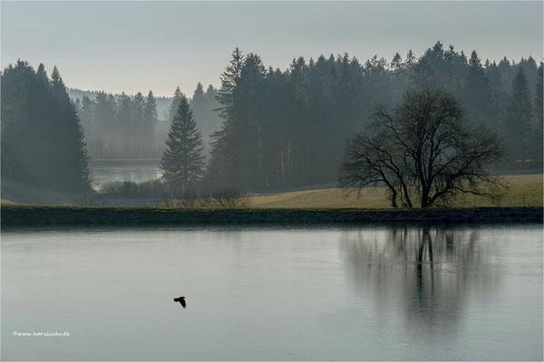 am Wasserläufer Teich ...