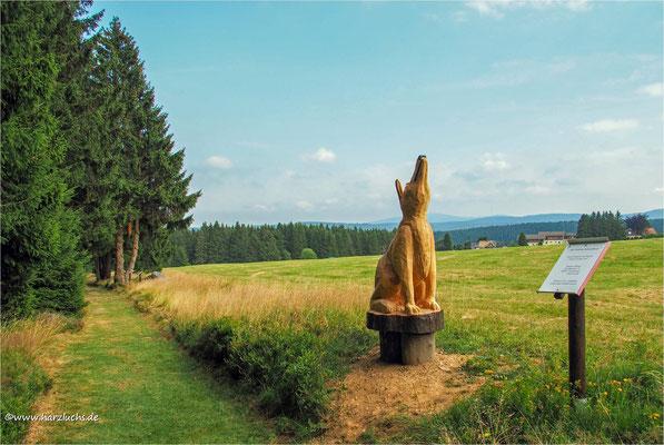 Wolf in Schulenberg gesichtet ... auf dem Stein- und Skulpturenpfad