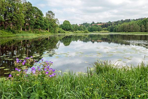 Spiegelung ... am Eulenspiegler Teich