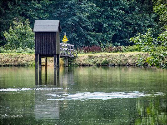Wasserläufer Teich