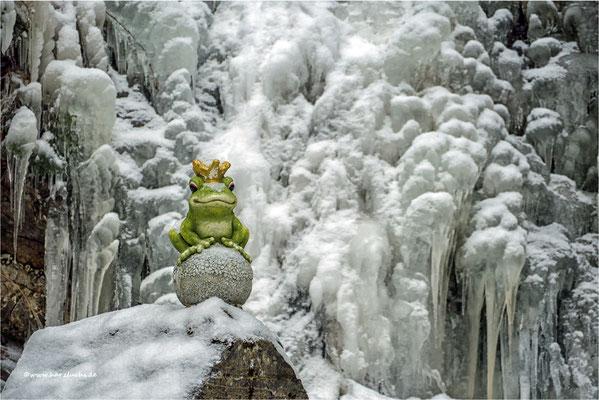 Froschkönig am Komkerhaller Wasserfall