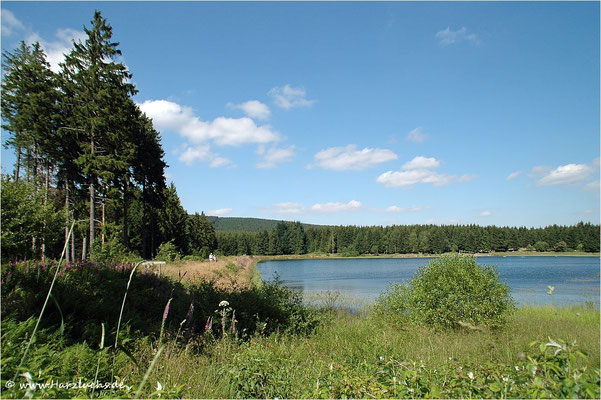 am Kiefhölzer Teich